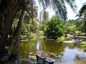 Brisbane City botanic gardens - Botanical gardens