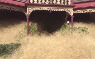 A Strange Phenomenon 'Hairy Panic' Gripping a Small Town in Australia
