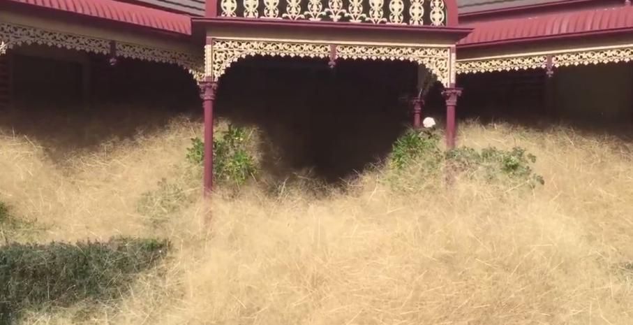 A Strange Phenomenon 'Hairy Panic' Gripping a Small Town in Australia