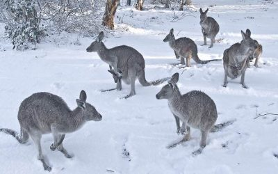 Winter is here – Australia hit with super cold weather!