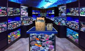 Best Aquarium Stores in Brisbane