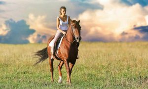 Best Horse Riding Tours Near Brisbane