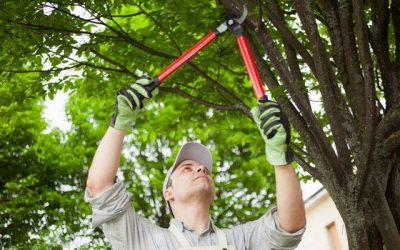 All You Need To Know About Pruning Your Trees